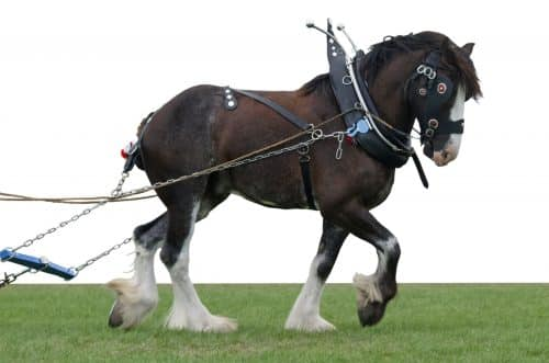 The Clydesdale Package - SEO Website Copywriting - The Rural Copywriter