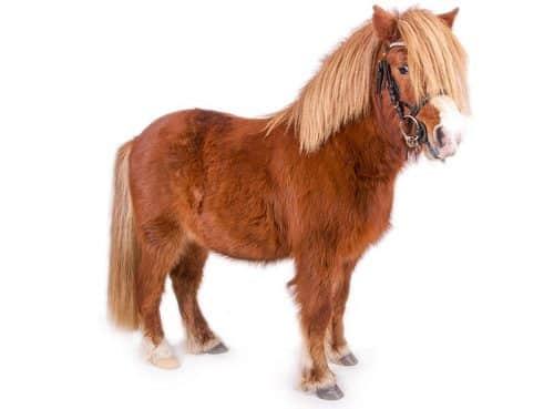 The Shetland Pony Package - The Rural Copywriter