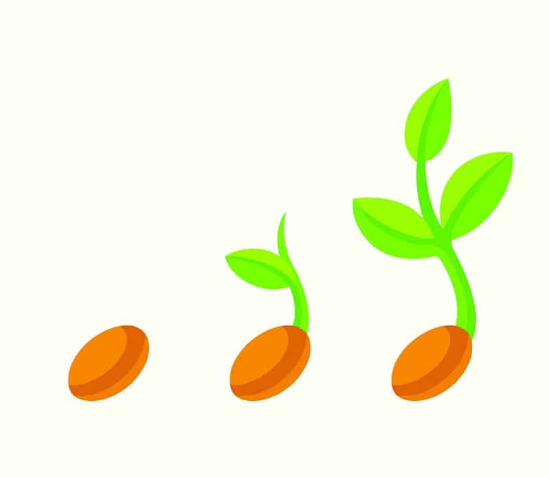 Sow Your Seeds Package - The Rural Copywriter