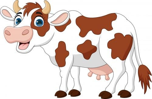 Rural Website Design - Cow Package