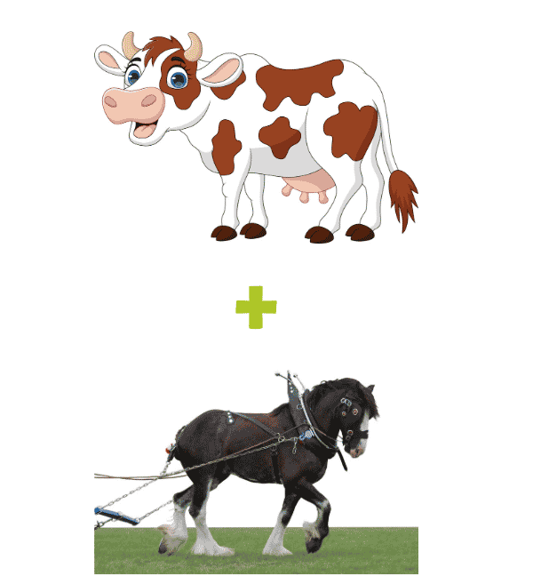 Cow Plus Clydesdale Package - Small Business Website Packages - The Rural Copywriter