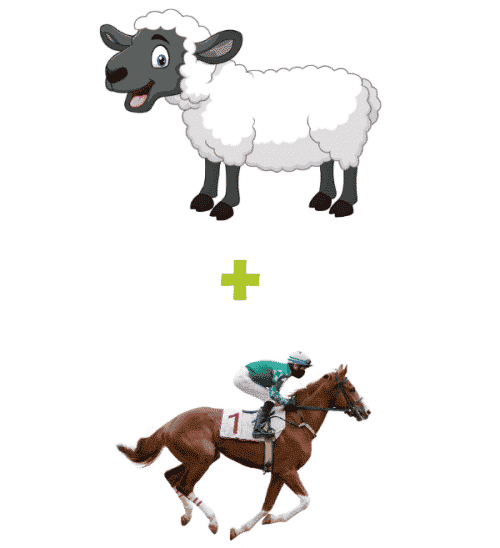 Sheep Plus Thoroughbred Package - Small Business Website Packages - The Rural Copywriter