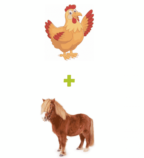Chicken Plus Shetland Package - Small Business Website Packages - The Rural Copywriter